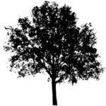 tree-vcoactivist